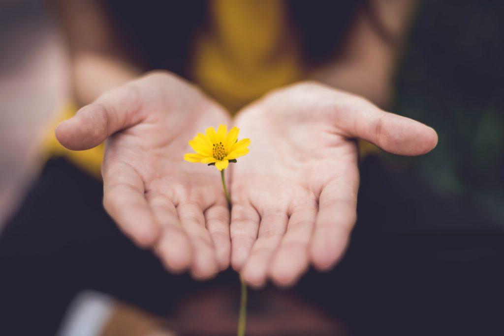 flower in palms