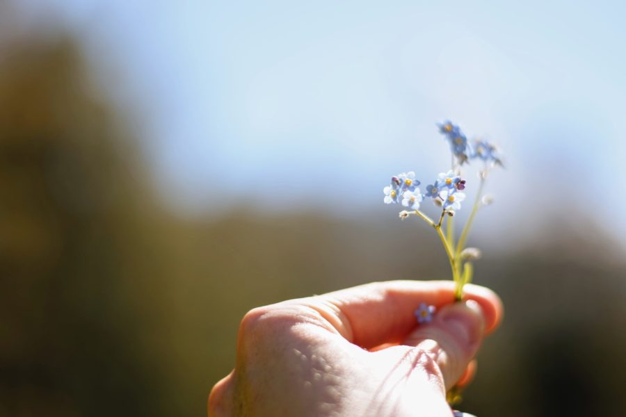 small blue flowers in hand on blue background